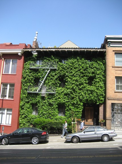 © 2012 S. D. Stewart, Ivy-covered house in Chinatown, San Francisco, California