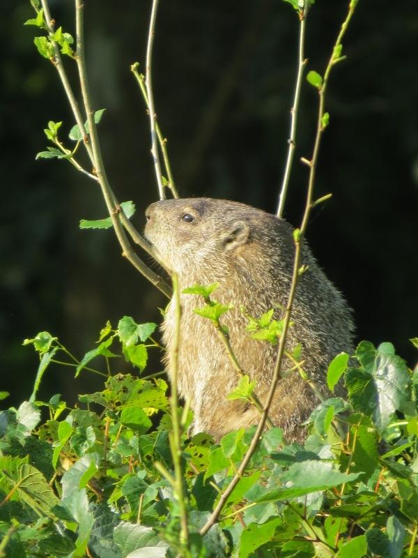 Groundhog, © 2016 S. D. Stewart