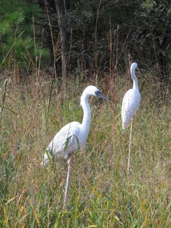 Fake Egrets